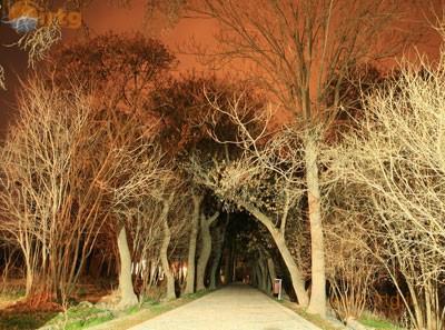 باغ شوکتآباد